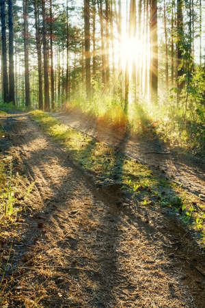 sunset in the woods Stock Photo - 13296456