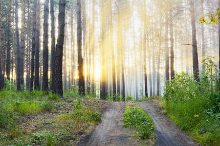 beautiful sunset in the forest Stock Photo - 13296452