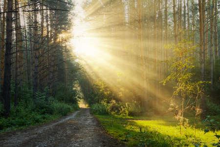 "wschód słońca: Wschód sÅ'oÅ""ca w mglisty las"