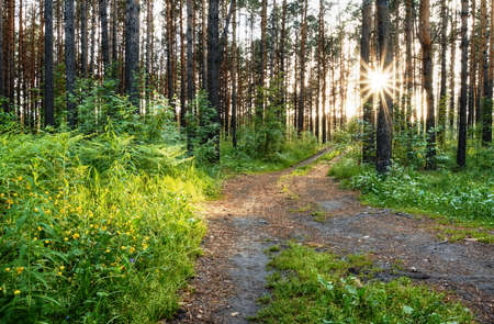 beautiful sunset in the forest after rain Stock Photo - 13774717