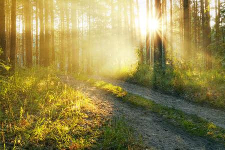 Puesta del sol en el bosque Foto de archivo - 15406641