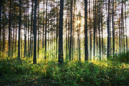 sunset woods  Stock Photo - 15568501