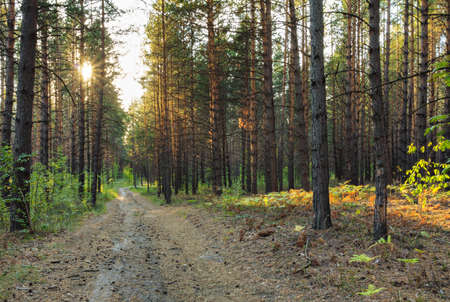 road in sunset forests photo