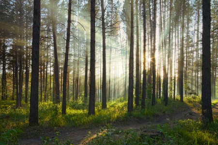 sunset in the forest Stock Photo - 17558696