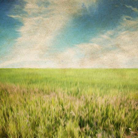 beautiful sky and summer fields Zdjęcie Seryjne - 25162950
