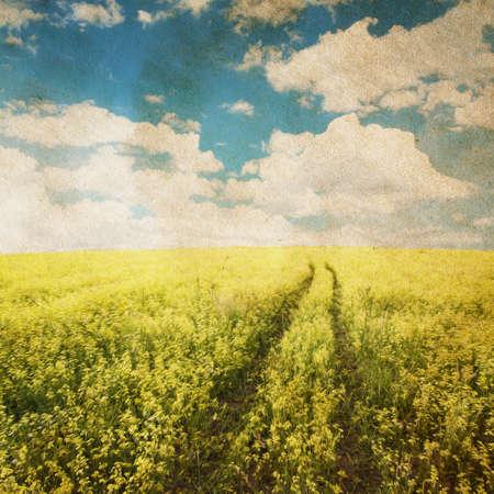 beautiful sky and yellow rapeseed field photo