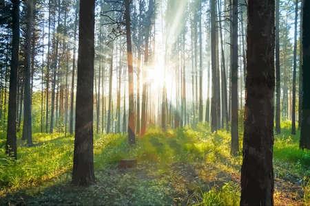 夕日の森  イラスト・ベクター素材