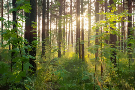 evergreen: beautiful sunset in the woods