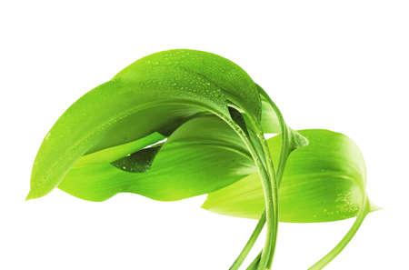 green background: green leaf on white background Illustration