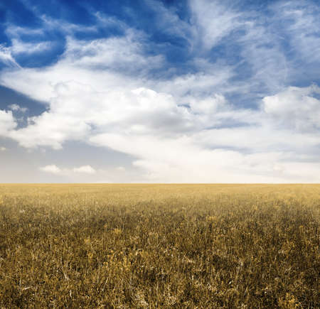 sky and autumn fields