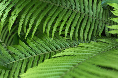 beautiful brught green fern background Zdjęcie Seryjne - 129845109