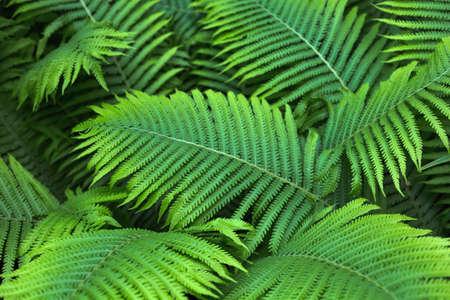 beautiful brught green fern background Zdjęcie Seryjne