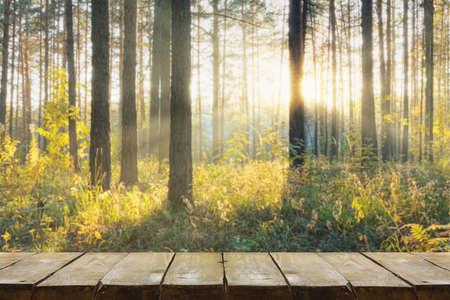 wooden table with forest background Zdjęcie Seryjne