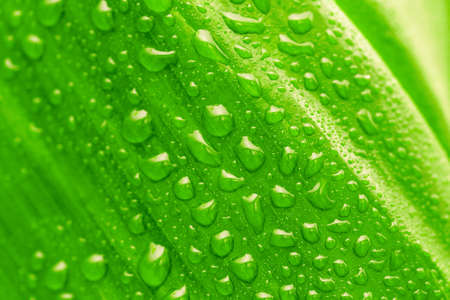 green leaf with drops of water, organic background Banque d'images - 167007307