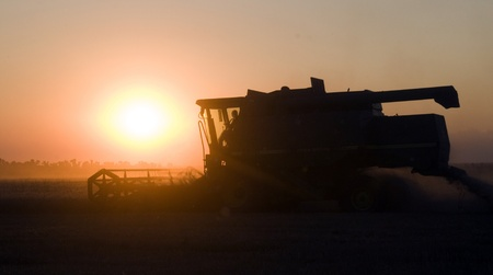 Combine removes wheat warm summer evening photo