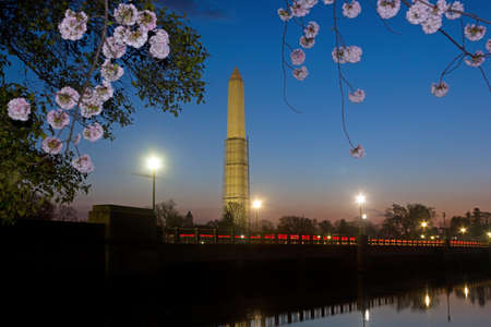 Washington Monument during cherry blossom  Washington Monument at dawn during cherry blossom in Washington DC United States