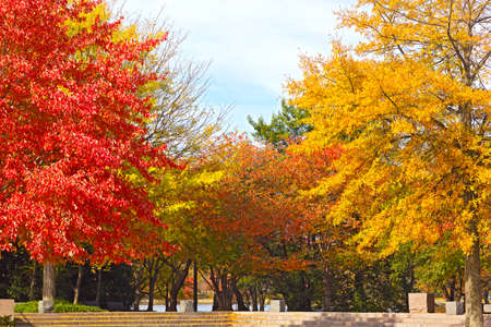 Trees in autumn foliage at Franklin Delano Roosevelt Memorial in Washington DC. Colorful deciduous trees in park near Tidal Basin on sunny fall morning. Stock Photo