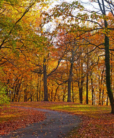 bike trail: A bike trail along deciduous trees in autumn. Colorful trees foliage in National Arboretum, Washington DC. Stock Photo