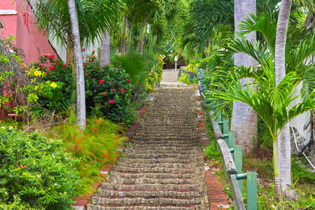 thomas stone: The 99 steps in Charlotte Amalie, St Thomas, USVI. The picturesque stairways with flowers and palm trees on both sides.