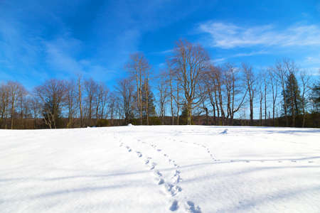 west virginia trees: Footprints on the snow and a forest on background. Winter in West Virginia Blackwater Falls Park. Stock Photo