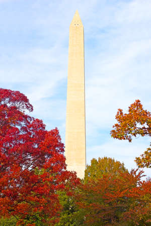 washington monument: Washington Monument surrounded by trees in autumn foliage. Fall in US capital with trees and Washington Monument on background