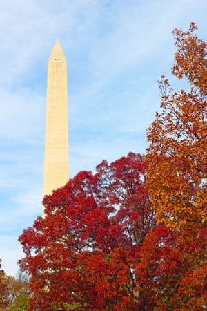 washington monument: Washington Monument surrounded by trees in autumn foliage. Fall in US capital landmark and colorful trees against a cloudy sky.