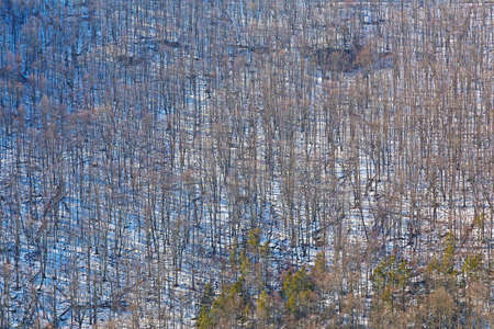 wintery: Sleeping beauty of a wintery canyon in West Virginia, USA. Trees in winter on side of the canyon. Stock Photo