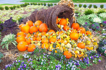 corn flower: Colors of autumn and Halloween with pumpkins. Basket with the harvest of pumpkins on the flower bed. Stock Photo