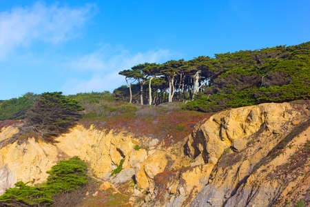 View of trees towering atop of Lands End Lookout. Lands End National Park in San Francisco, USA.