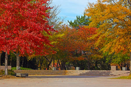 delano: Colorful deciduous trees in park near Tidal Basin on sunny fall morning. Trees in autumn foliage at Franklin Delano Roosevelt Memorial in Washington DC. Stock Photo