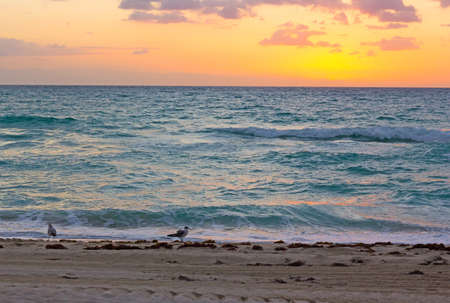 seaweeds: Sunrise over the ocean in Miami Beach. Seagulls wait for the sun to appear above the clouds.