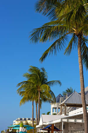 clave sol: Tropical tall under the sun in Key West, Florida, USA. Southern Florida tourist destination on a spring day.