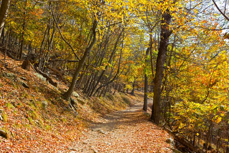 appalachian: A forest train in autumn. Appalachian trail in West Virginia, USA.