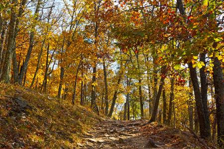 appalachian: Appalachian trail in autumn in West Virginia, USA. Sun paves the way of a rocky mountain terrain.