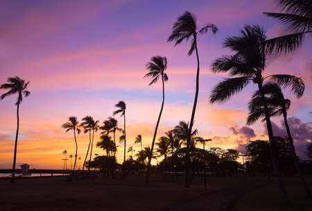 Colorful sunset at Waikiki beach in Hawaii, USA. Tropical beach at sunset with pal grove against the skies. Фото со стока