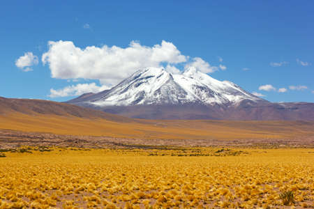 Grassland and mountains with snow peaks on horizon in the Atacama Desert, Chile. The natural beauty of vast wilderness. Stock Photo