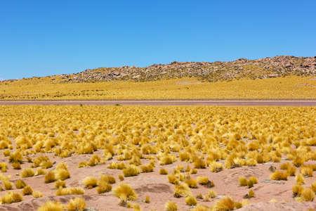 Grassland of Atacama Desert with an empty road, Chile. Desert landscape at high altitude. Stock Photo