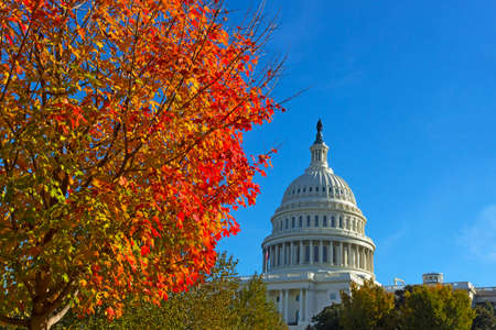 Autumn on Capitol Hill in Washington DC, USA. Maple tree in fall near US Capitol.