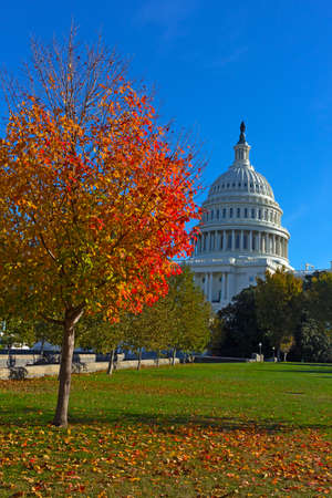 Autumn on Capitol Hill in Washington DC, USA. Maple tree in fall on US Capitol grounds. Imagens - 115697625