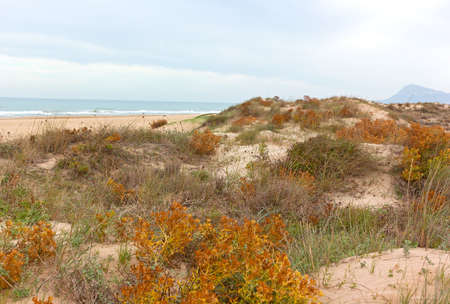 Sandy dunes of a sea beach in late autumn, Denia, Valencia, Spain. Colorful dunes flora comes to live after hot summer days. Фото со стока