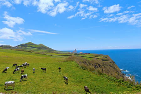 Historic lighthouse of Ponta da Ferraria and pasture on Sao Miguel Island of Azores, Portugal. Picturesque hilly meadows with cows under blue skies.