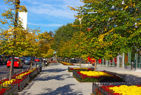 Washington DC street in early autumn, USA. A broad bikes friendly sidewalk with flowerbeds on a sunny morning.
