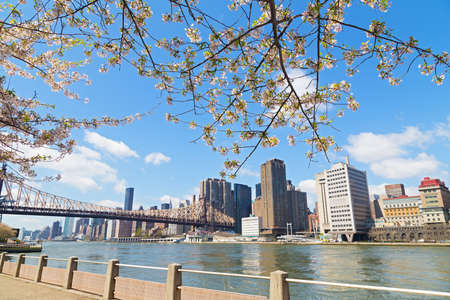 Spring flowers with East River view and Manhattan skyline in New York, USA. Cherry flowers and beautiful Manhattan landscape.