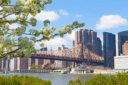 A view on Manhattan from Roosevelt Island in spring flowering season, New York, USA. Apple flowers with beautiful Manhattan landscape.