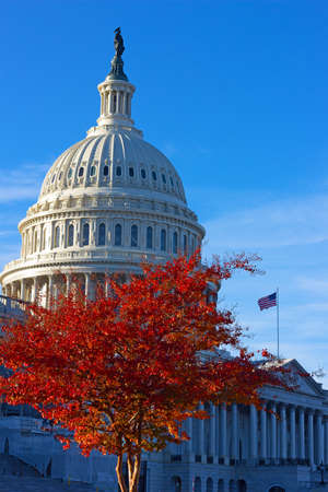 Tree lit by the sun with autumn foliage on the Capitol Hill grounds. The Statue of Freedom on top of US Capitol dome under blues skies in Washington DC, USA.