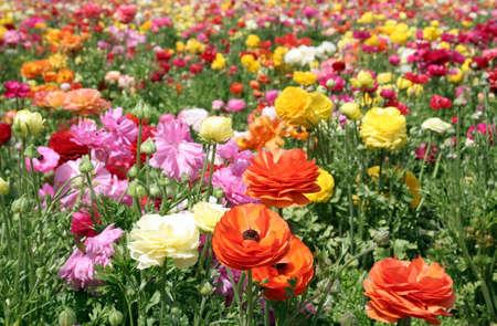 Deep Colorful flower field multicolor