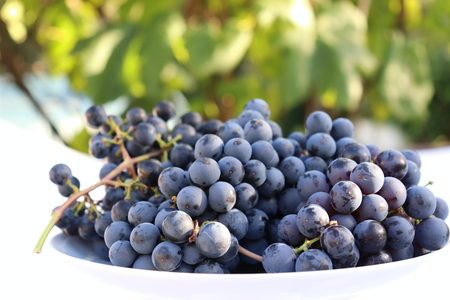 Harvest time. .A white bowl full of fresh red grapes in late afternoon sun Stock Photo