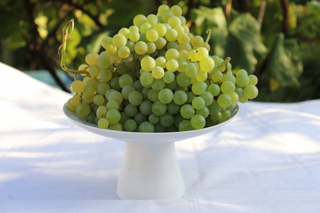 Harvest time. A white bowl full of fresh green grapes in late afternoon sun