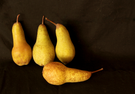 Pears harvest. Fruit background. Fresh organic pears. Pear autumn harvest. Juicy flavorful pears on black background. Free space for text. Autumn nature concept.