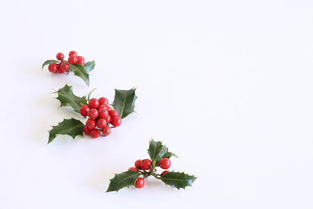 Christmas holly with red berries. Traditional festive decoration. Holly branch with red berries on white table background,flat lay, top view.